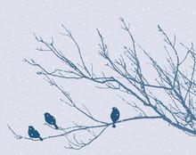 Gorriones en una rama