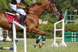 Obrazy na płótnie, fototapety, zdjęcia, fotoobrazy drukowane : Horse jump a hurdle