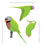 Parrot Asia Cartoon Vector Illustration
