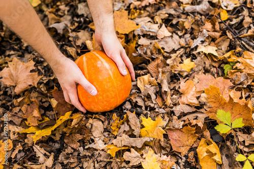 pumpkin in autumn leaves.