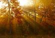 Sunlights in autumn forest