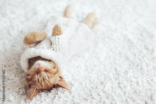Poster Gigner kitten