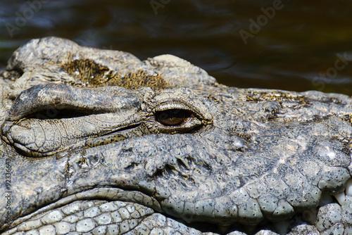 Foto op Plexiglas Krokodil Group crocodile