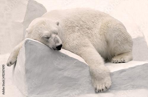 Fotobehang Antarctica Белый медведь спит.
