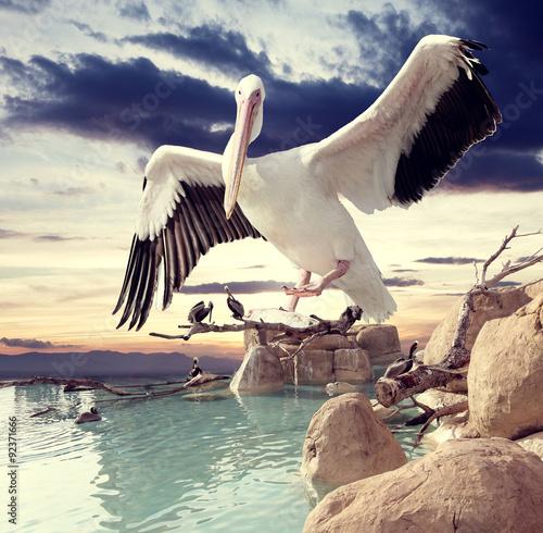 Aves y puesta de sol .Paisaje surrealista