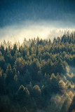 Fototapety Misty pine forest on the mountain slope in a nature reserve