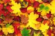 Obrazy na płótnie, fototapety, zdjęcia, fotoobrazy drukowane :  autumn leaves