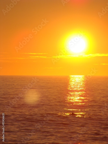 Obraz na Szkle Coucher de soleil avec les dauphins