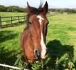 Obrazy na płótnie, fototapety, zdjęcia, fotoobrazy drukowane : Horse head