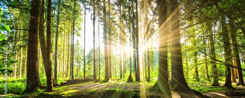 obraz PCV Wald Panorama mit Sonnenstrahlen