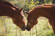 Obrazy na płótnie, fototapety, zdjęcia, fotoobrazy drukowane : Horse love