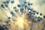 Fototapety Frozen meadow plant