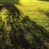green grass texture poster