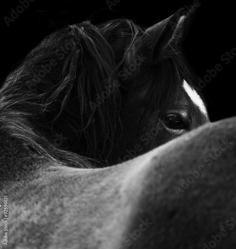 Close Up horse eye. On black background. Black and white color
