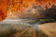 Obrazy na płótnie, fototapety, zdjęcia, fotoobrazy drukowane : Composite image of autumn leaves