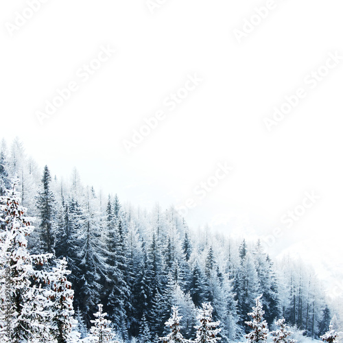 Snow covered forest - 92658298