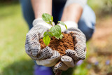 hands in gloves with soil and a plant