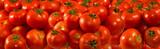 many ripe tomatoes closeup