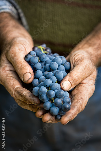 Poster Farmers hands with cluster of grapes