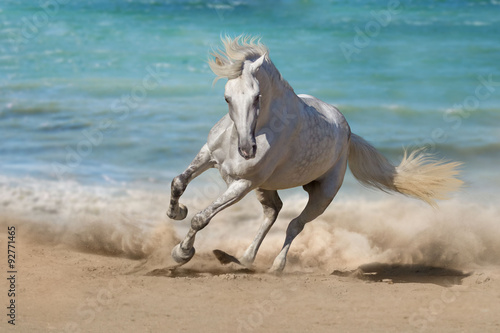 Obraz na Szkle Beautiful horse run along the shore of the sea