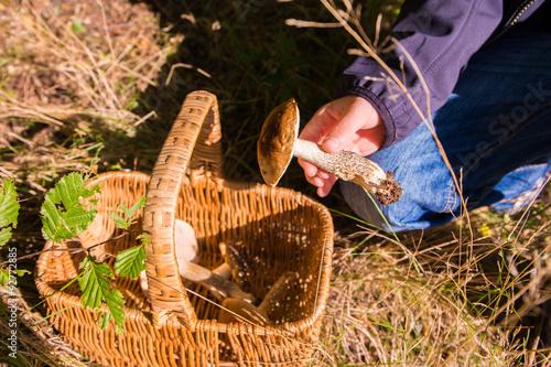 Billede Pilze sammeln