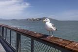 Isola di Alcatraz - San Francisco