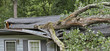 Storm Fells Tree Destroying a House Roof