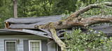 Storm Fells Tree Destroying a House Roof - 92816877