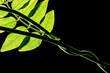 green leaf on a dark background
