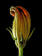 plant on dark background