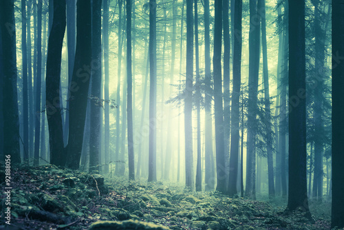 Magical blue green saturated foggy forest trees landscape. Color filter effect used. Picture was taken in south east Slovenia, Europe.