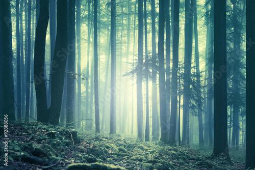 magiczna-blekitna-zielen-naszly-mglowy-lasowy-krajobraz