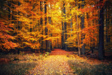 Fototapety Autumn park
