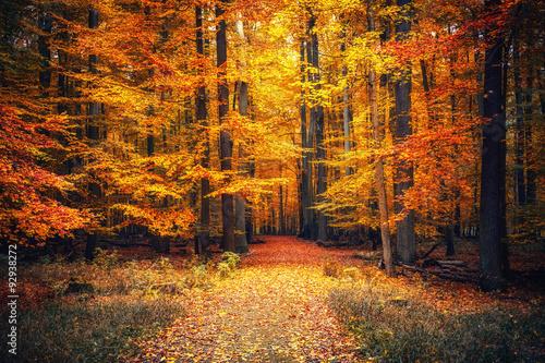 mata magnetyczna Autumn park