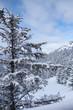 winter snow trees landscape