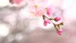 Spring blossom background. Nature scene with blooming sakura tree over mountains