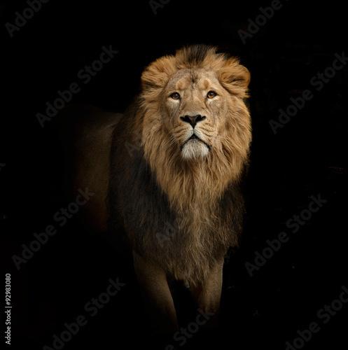 Aluminium Lion lion portrait on black