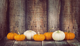 Fototapety Mini pumpkins in a row against rustic wooden background