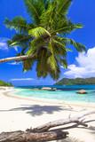 pure tropics. white sand, palm-tree, azure sea - 93023050
