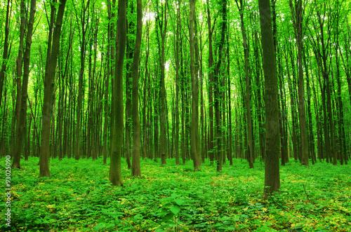 obraz PCV forest green
