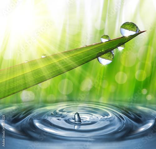 swieza-zielona-trawa-z-rosa-opuszcza-zblizenie-natura-b