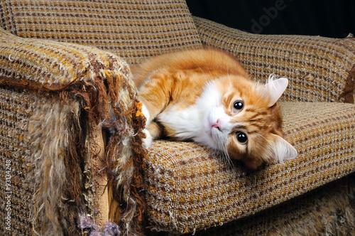 Poster Pet und Möbel
