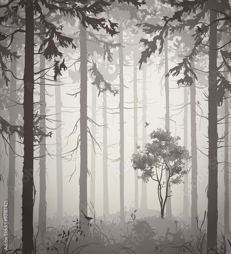 forest © kozerog2015