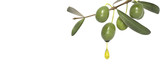 olive branch with oil drop
