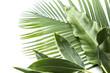 アジアな植物