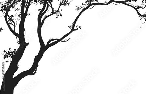 drzewo-lisciaste