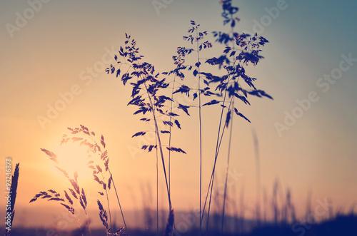 Juliste Meadow at sunset, zen meditative scene