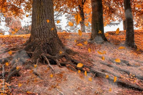 Poster Oranje eclat Goldener Hebst im Wald