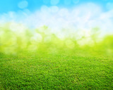 grass background - Fine Art prints