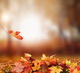 Fototapety Falling Autumn Leaves background